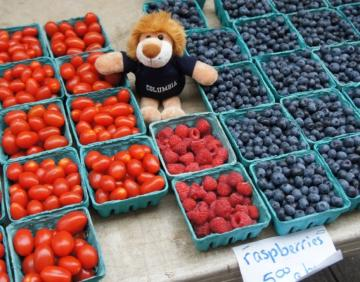 Roar-ee Lion at the farmers' market